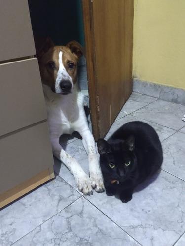 cachorro de 1 año en adopción