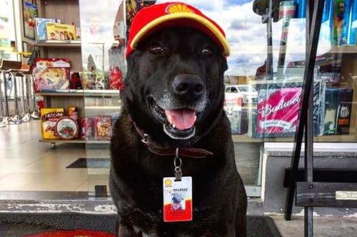 cachorro segurança