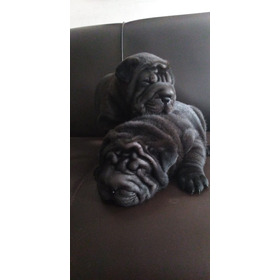 Cachorro Shar Pei Americano Con Microchip Y Voucher Kennel