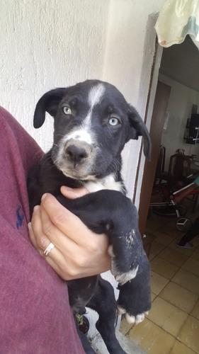 cachorros 2 meses, vacunados y desparacitados!