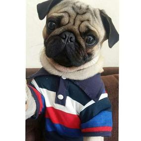 18e7beacf34a5 Roupa Camisa Brasil Para Cachorro - Laços e Roupas para Cachorros no ...