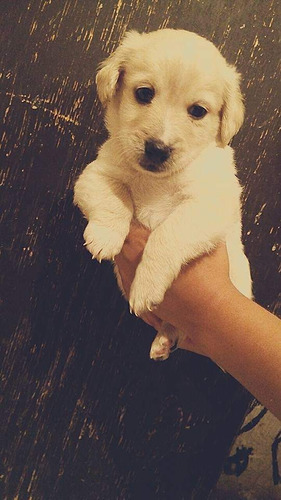 cachorros cruza en adopción