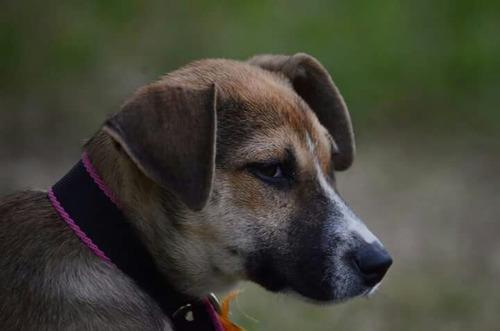 cachorros en adopcion