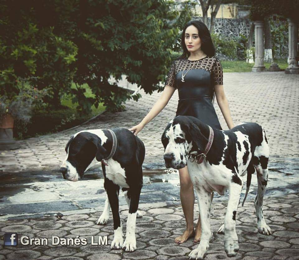 Great dane dogs for sale in bangalore dating 9