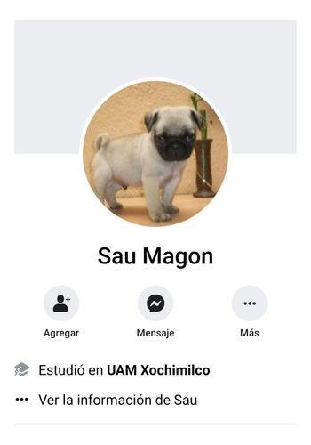 cachorros pug baratos adopción. fraude, cuidado.