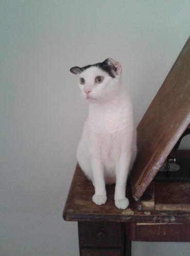 cachucho y catire gatitos en adopcion .guarenas