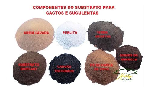 cactos e suculentas  mix especial para plantio - 5 litros