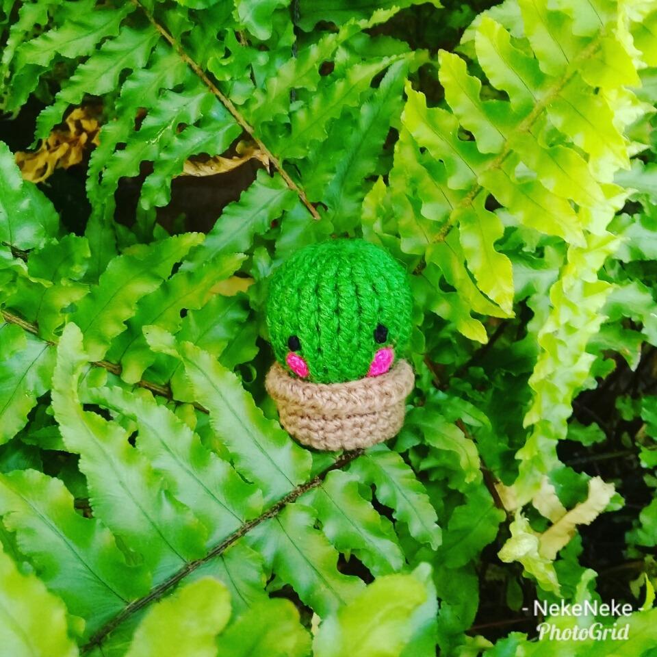 Cactus Y Deco Al Crochet - Amigurumis - $ 60,00 en MercadoLibre ... | 960x960