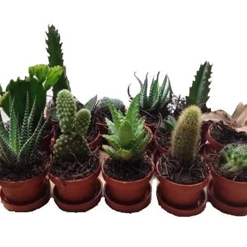 cactus con suculenta miniatura oferta mas costo de envío