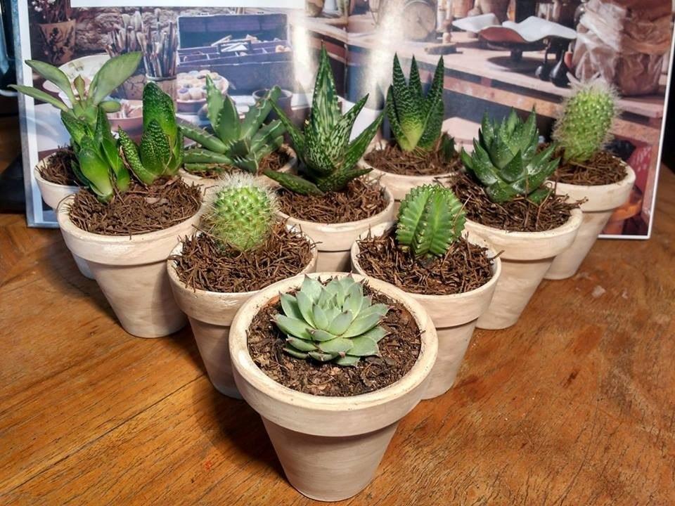 Cactus en maceta de barro tipo vintage en for Macetas de barro pequenas