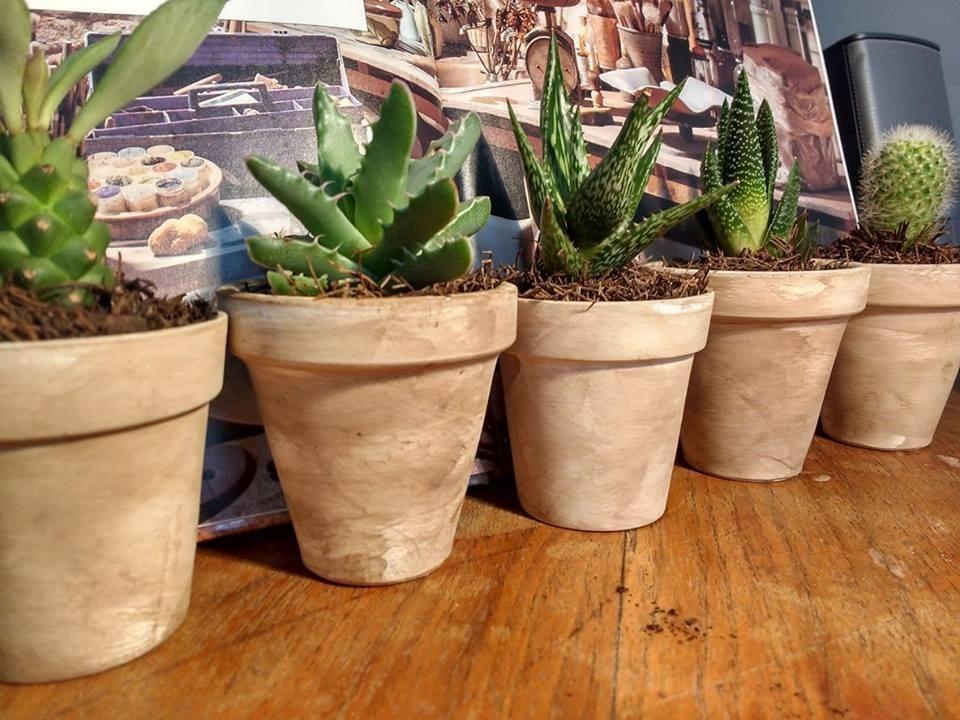 Cactus en maceta de barro tipo vintage en - Cactus en macetas pequenas ...