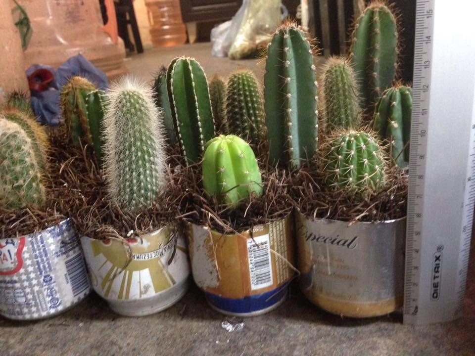 Cactus ex ticos por caja 30 pzas en mercado libre for Donde venden cactus