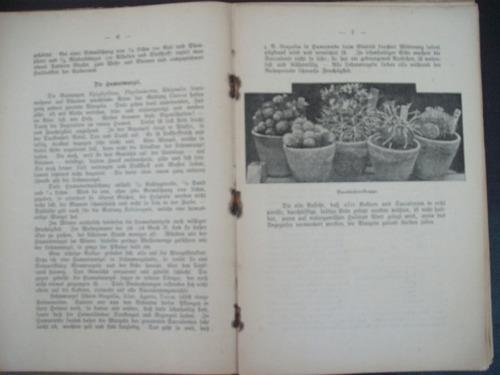 cactus - livro alemão antigo( 1902)