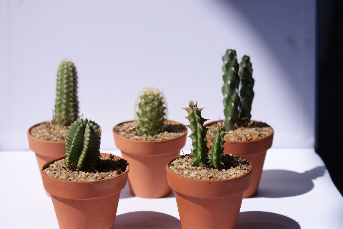 Cactus miniatura en maceta de barro en mercado libre - Cactus en macetas pequenas ...