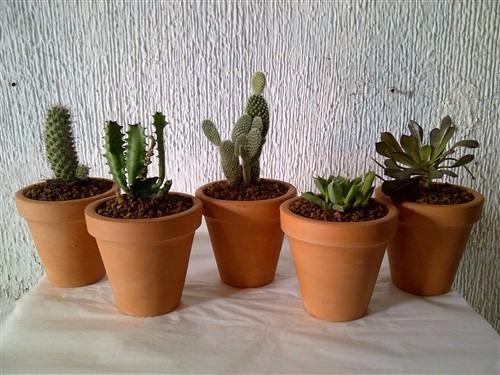 Cactus miniatura en minimaceta barro caja 100pzas for Plantas precios viveros