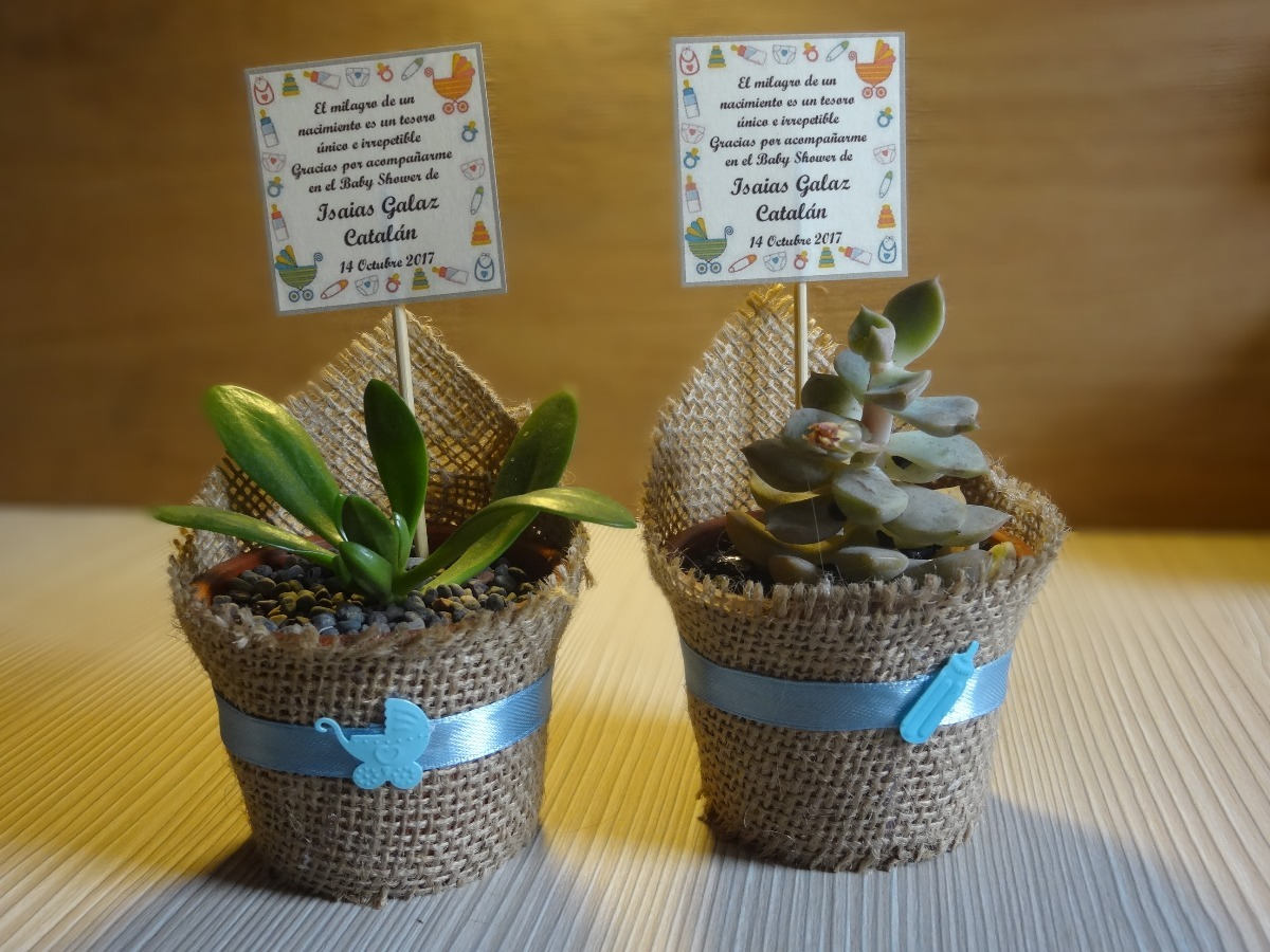 Cactus suculentas para regalos baby shower matrimonios y for Cactus enanos por mayor