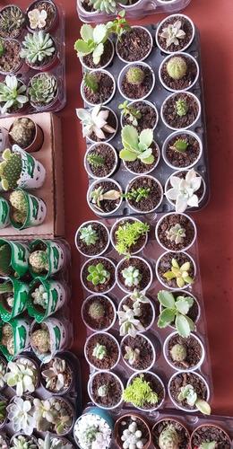 cactus y suculentas a buen precio