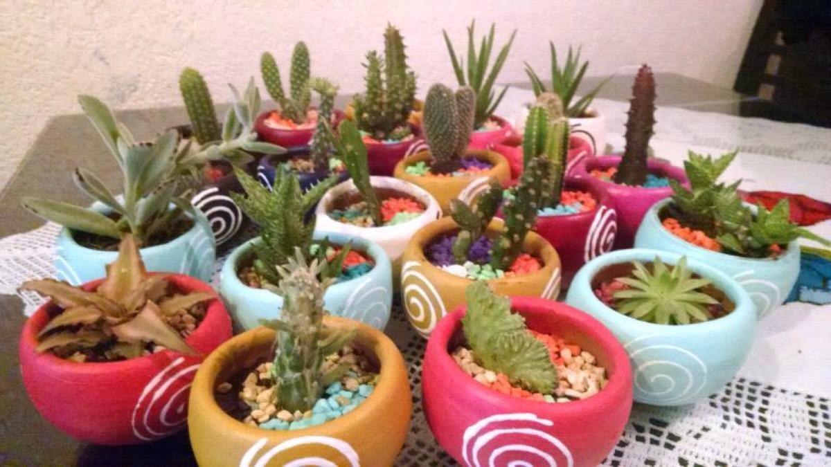 Cactus y suculentas decoradas en maceta venta al mayoreo for Donde venden cactus