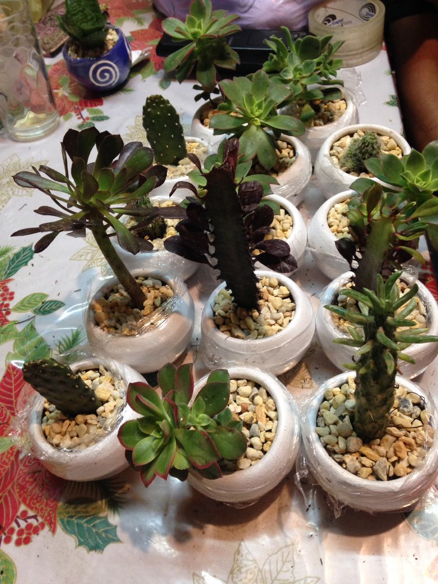 Cactus y suculentas decoradas y personalizadas for Cactus y suculentas