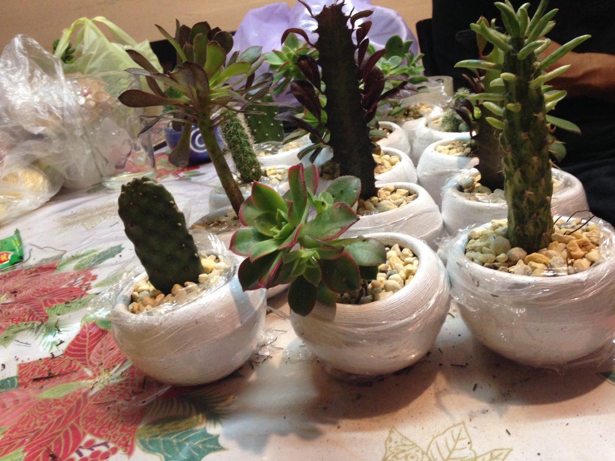 Cactus y suculentas decoradas y personalizadas for Donde venden cactus