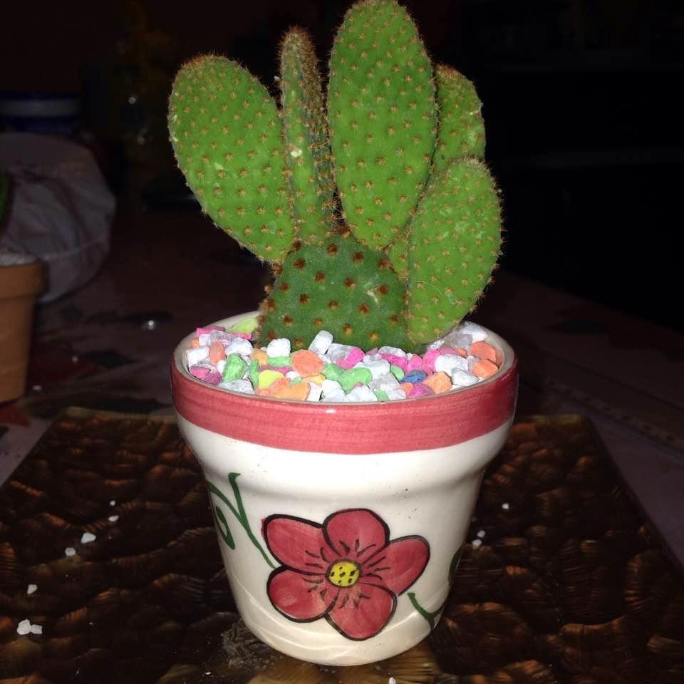 cactus y suculentas miniatura con elegante maceta artesanal