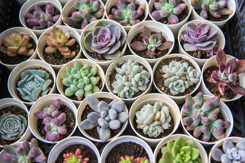 Cactus y suculentas para recuerdos matrimonio bautizo for Suculentas chile