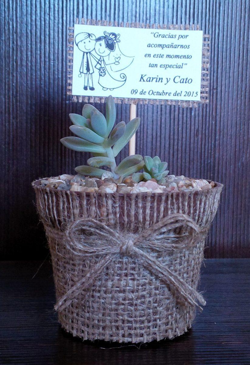 cactus y suculentas para recuerdos precio por mayor