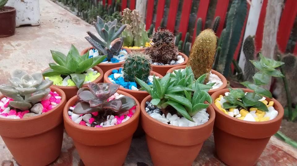 cactus y suculentas por mayor s 2 00 en mercado libre On cactus y suculentas por mayor