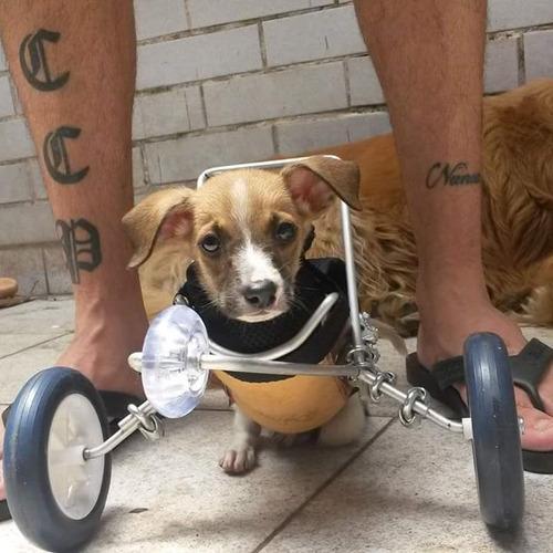 cadeiras de rodas para cães e gatos