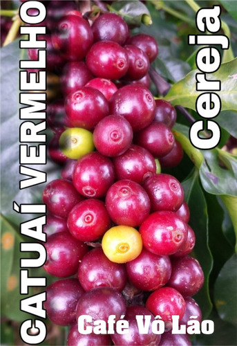 café 20kg r$34,00/kg em pó ( com brinde 4 kg fubá ) gourmet