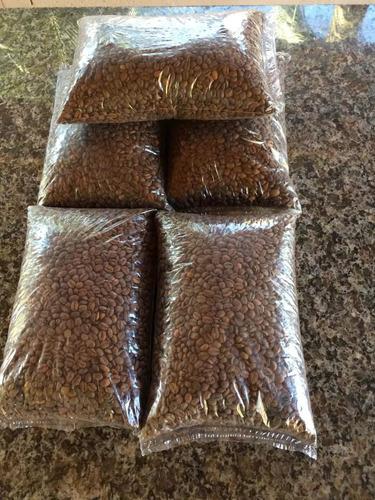 café arábica sul de minas torrado em grãos 4kg