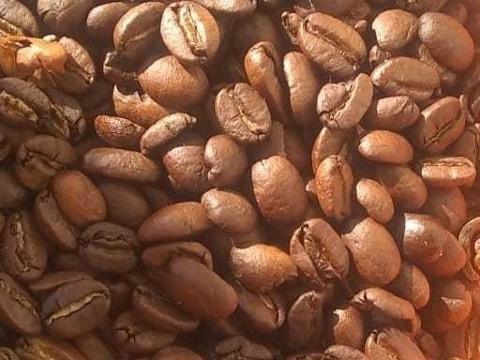 café gourmet arábica