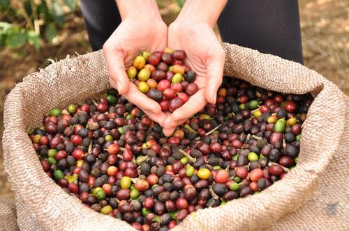 café torrado em grãos,pacote de 01 kg ,100%arábica