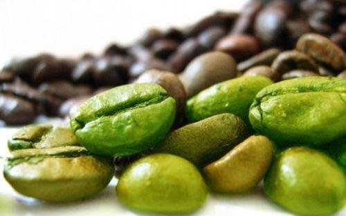 café verde 500mg 120 capsulas apisnutri