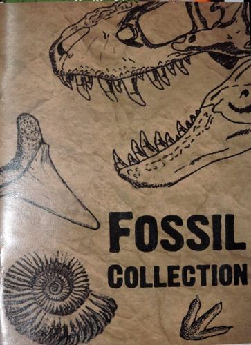 caixa com pequena coleção de fósseis estrangeiros - 4