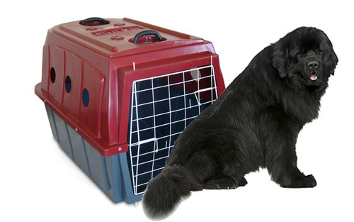 caixa de transporte para cães grandes plastkão numero = 05
