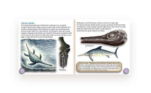 caja colección de fósiles junior con estudio de los fó...