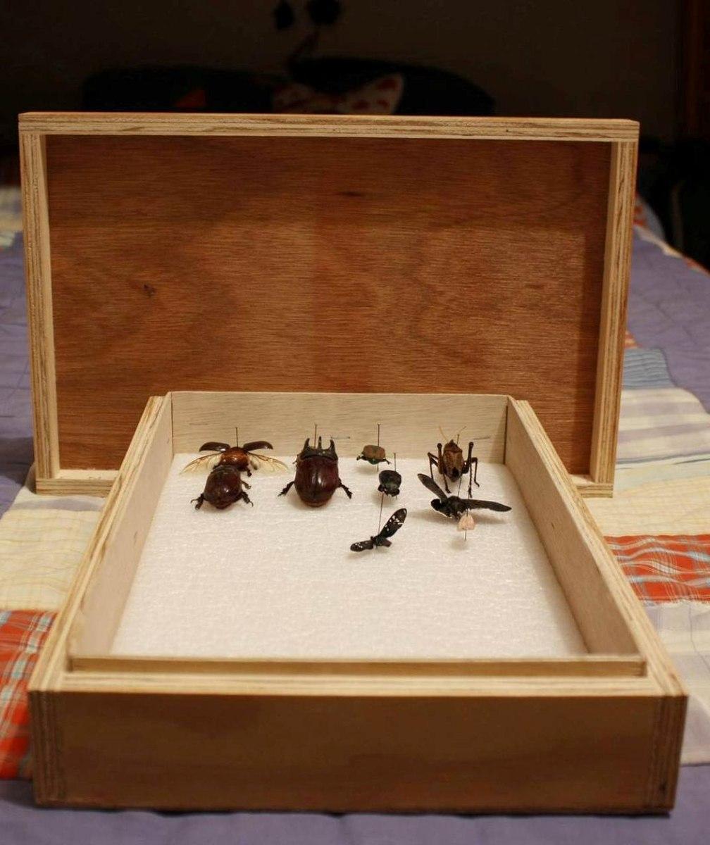 Caja Entomol Gica Madera Biolog A 330 00 En Mercado Libre ~ Cajas De Madera Con Tapa De Cristal