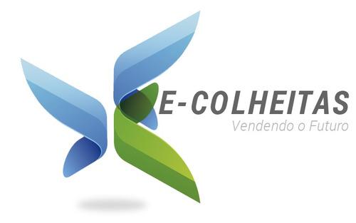 caládio - alocasia - colocasia - xanthosoma - 12,90 cada!