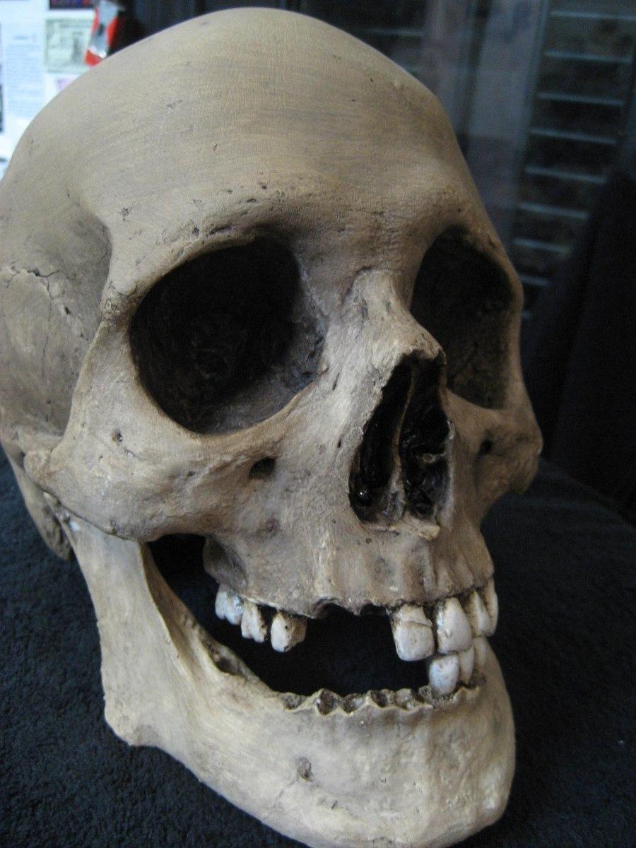 Calavera Replica De Esqueleto, Craneo Fibra De Vidrio! Skull ...