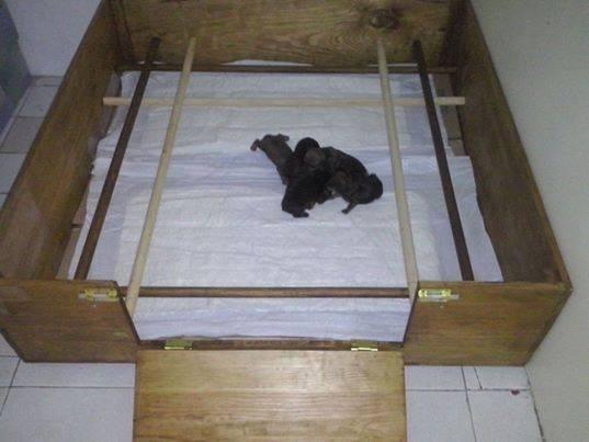 Cama caja para parto perros chicos en mercado for Camas para perros de madera