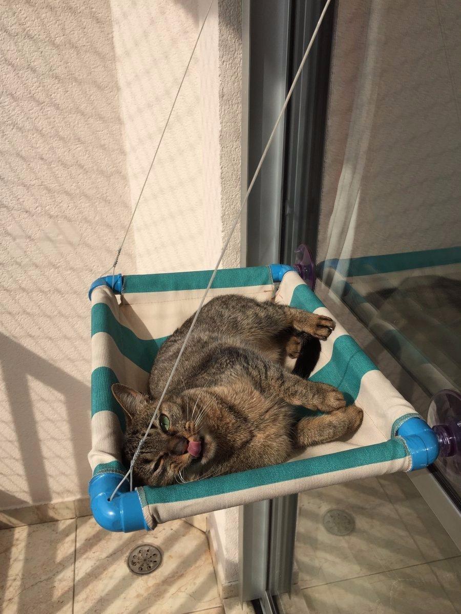 Cama gato caminha pet ventosas para janelas mimax cat r - Cama para gato ...