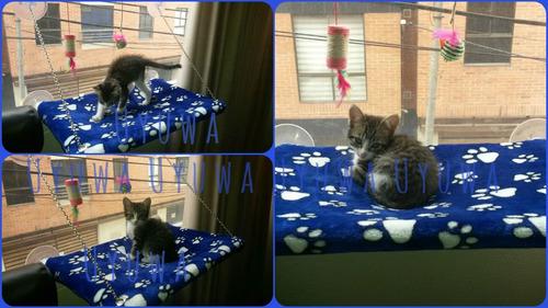 cama para gato, cama silla colgante de ventana para mascota