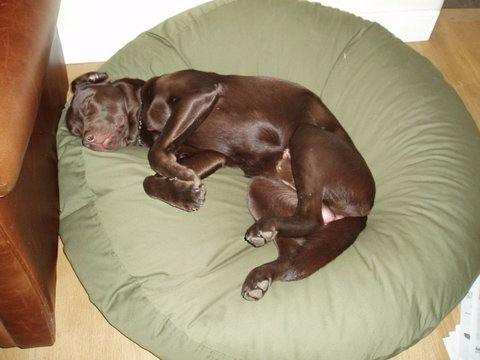 cama pet m para cães gatos impermeável fácil limpeza **vazio
