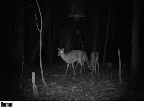camara de rastreo, con visión nocturna. primos 63051