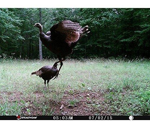 camara de trail de stealth cam 14 ir emitter hunting game co
