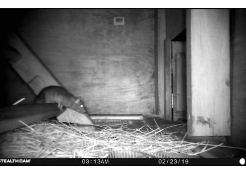 camara trampa o rastreo digital stealth cam p12 8mp video