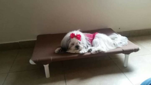 camas catres para perros todas las razas chica