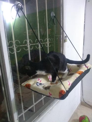 camas flotantes para tu gato - kg a $32000
