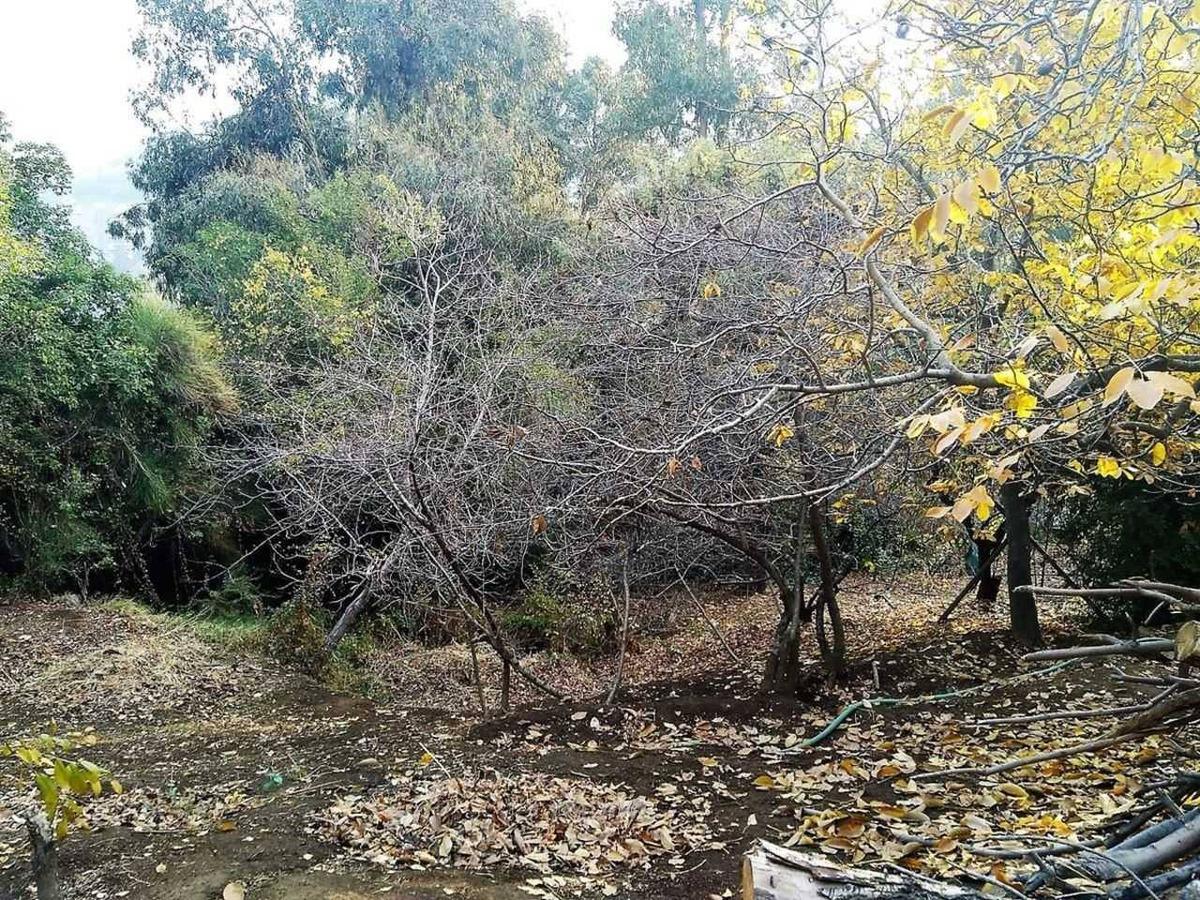 camino el cajon / las acacias